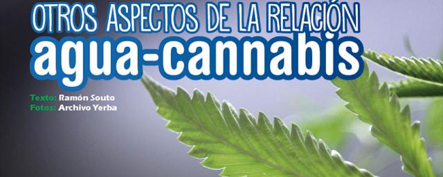 portada agua cannabis