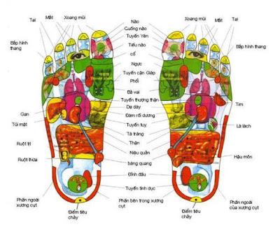 Huyệt đạo trên bàn chân