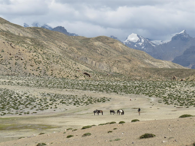 Horses near Dhankar Lake
