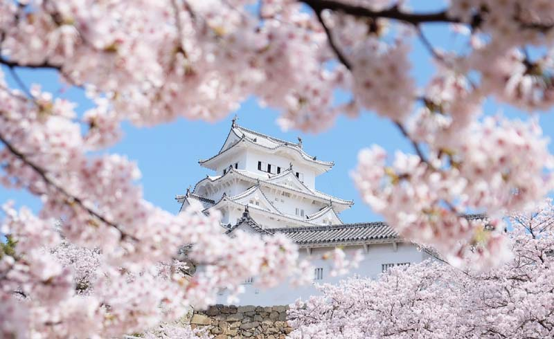 Japanese cherry blossom, Cherry blossom festival, Cherry blossom season, Japan Cherry blossom peak 2019, Cherry blossom forecast, When do cherry blossoms bloom in Japan, Best places to see cherry blossoms