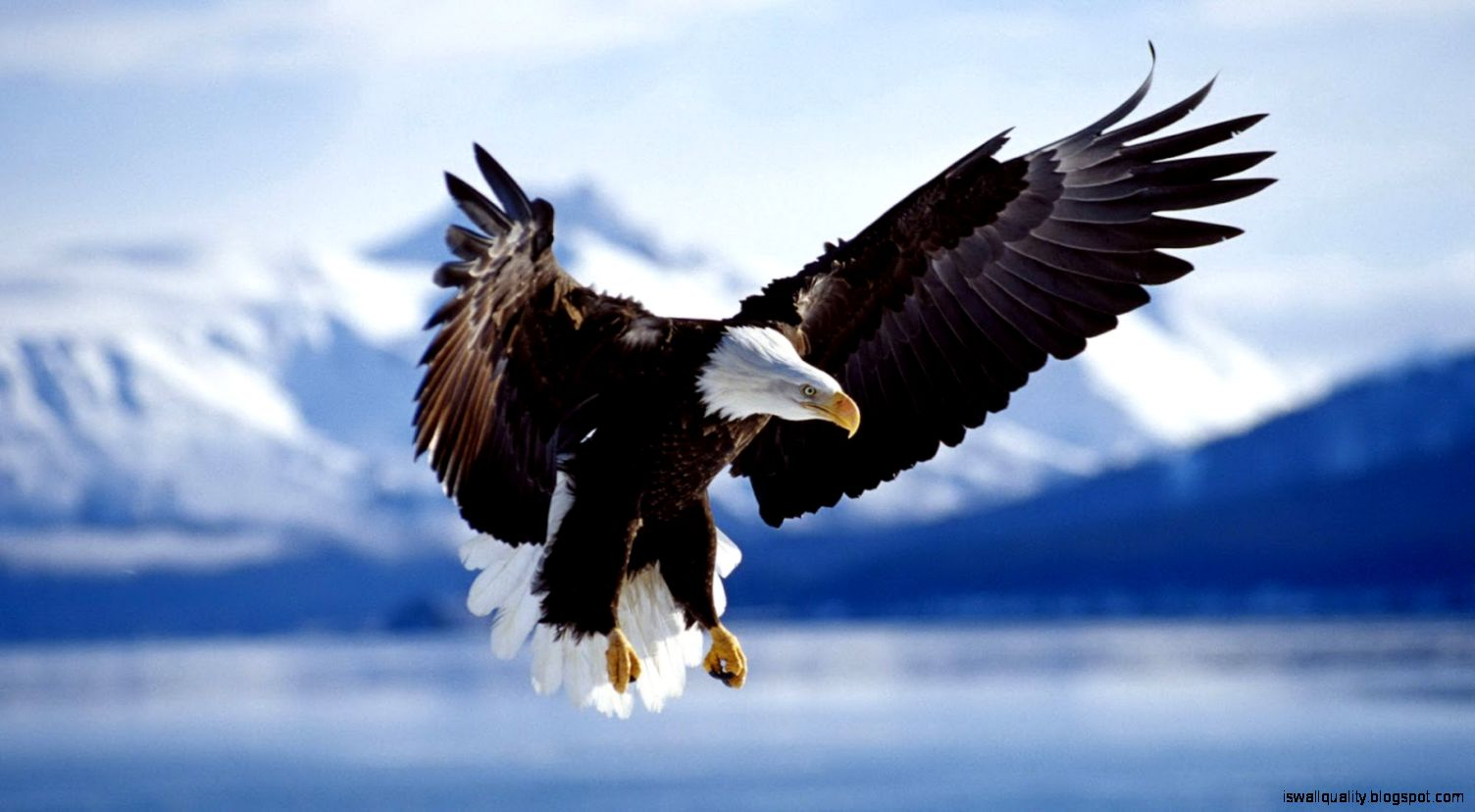 eagle animal wallpaper hd | wallpapers quality