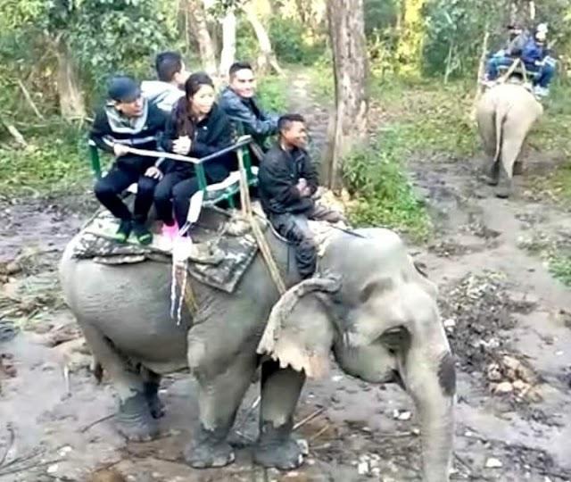MC Mary Kom* enjoys elephant safari at Kaziranga National Park