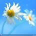 Làm hiệu ứng trang trí Desktop