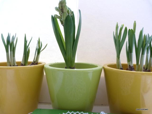 wiosna na kuchennym parapecie