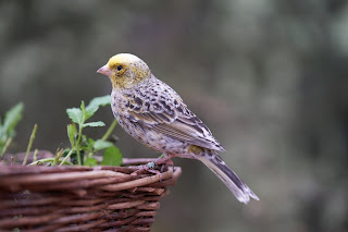 4 Ways Attract More Birds To Your Garden