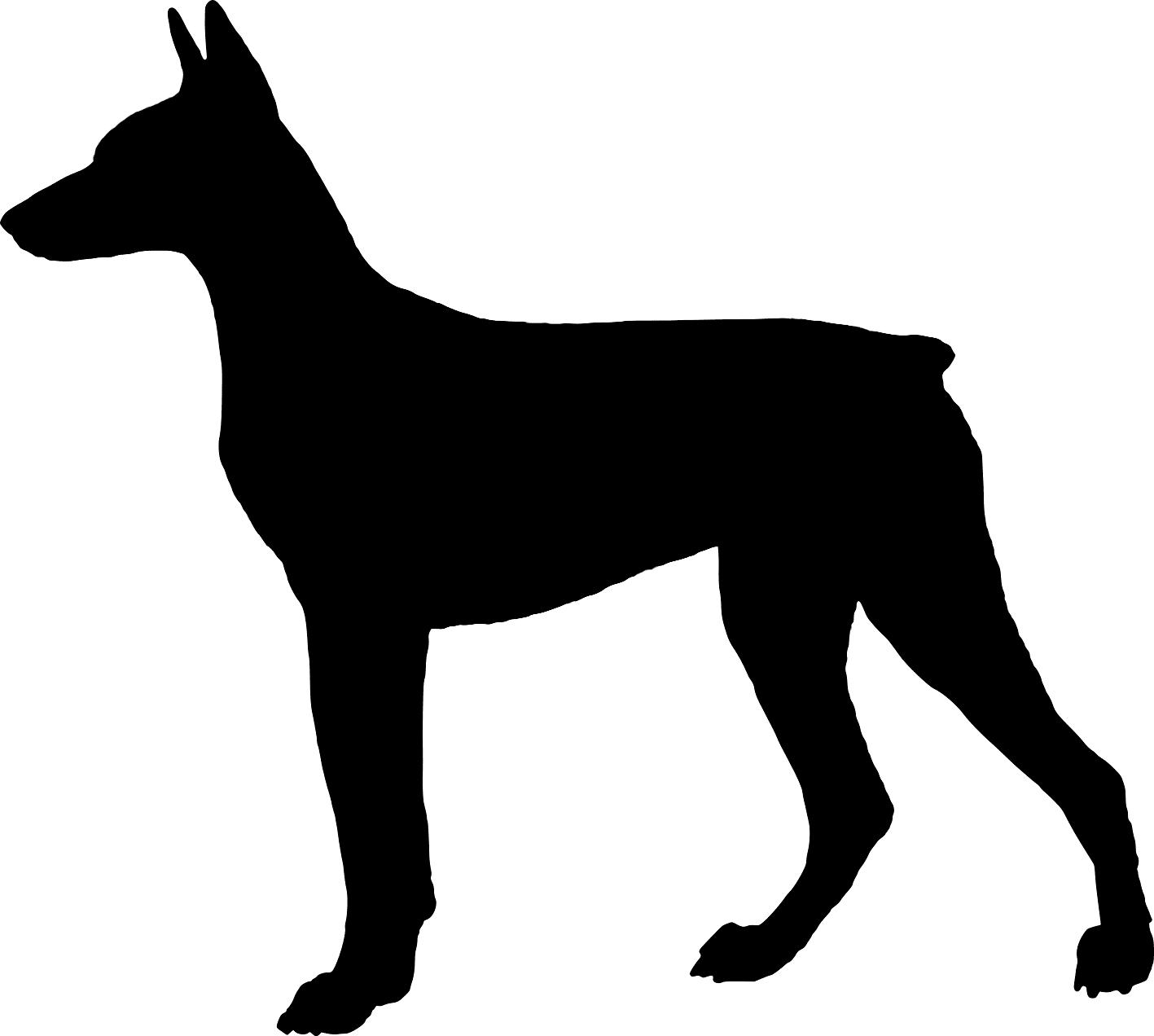 Dog Head Of Femur Removed Can Dog Still Walk
