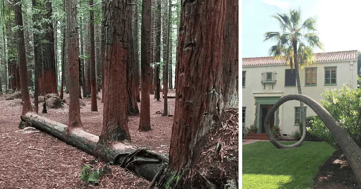 17 Pictures Of Trees That Prove The Miracle Of Life