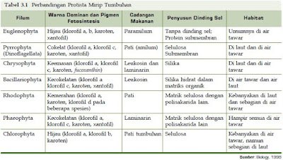 Klasifikasi dan Contoh Kingdom Protista Mirip Tumbuhan