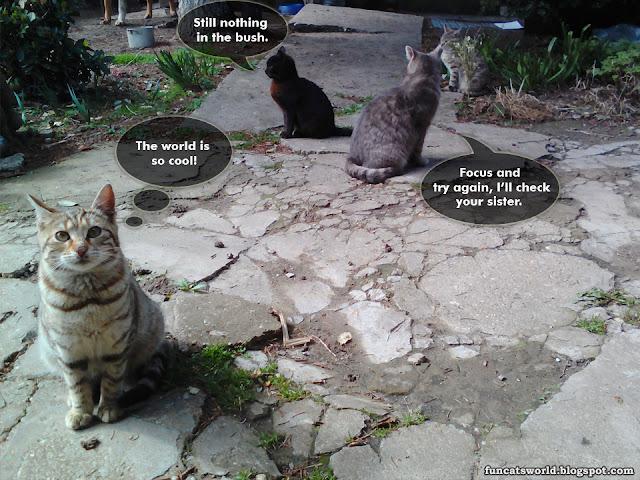 Cat's School