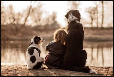 Luận bàn về lòng trung thành của loài chó