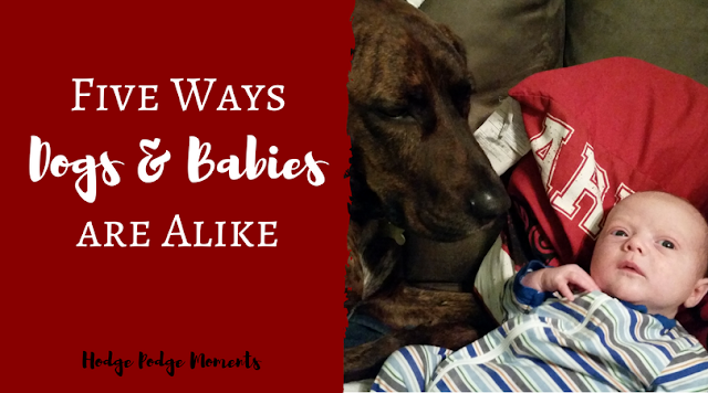 Five Ways Dogs and Babies are Alike