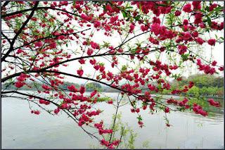 原創 650 【千秋歲?春遊】/ 同題韻和庭子 - 沧海一粟 - 滄海中的一粒粟子
