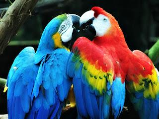 Araras do Parque Zoológico de Sapucaia