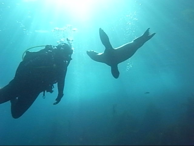 The Dive Shack Tides