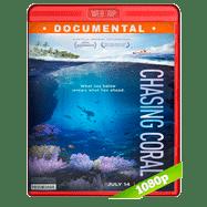 En busca del coral (2017) WEBRip 1080p Audio Dual Latino-Ingles