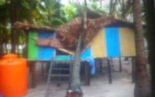Angin Kencang Dan Pohon Tumbang, Rusak Rumah Warga Di Takabonerate
