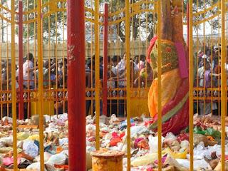 Sammakka Saralamma Jatara 2016 Dates
