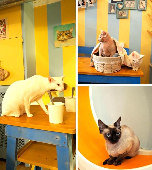 paris best cat café