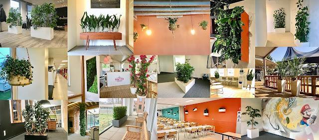 Planten en kamerplanten kopen online of in webshop