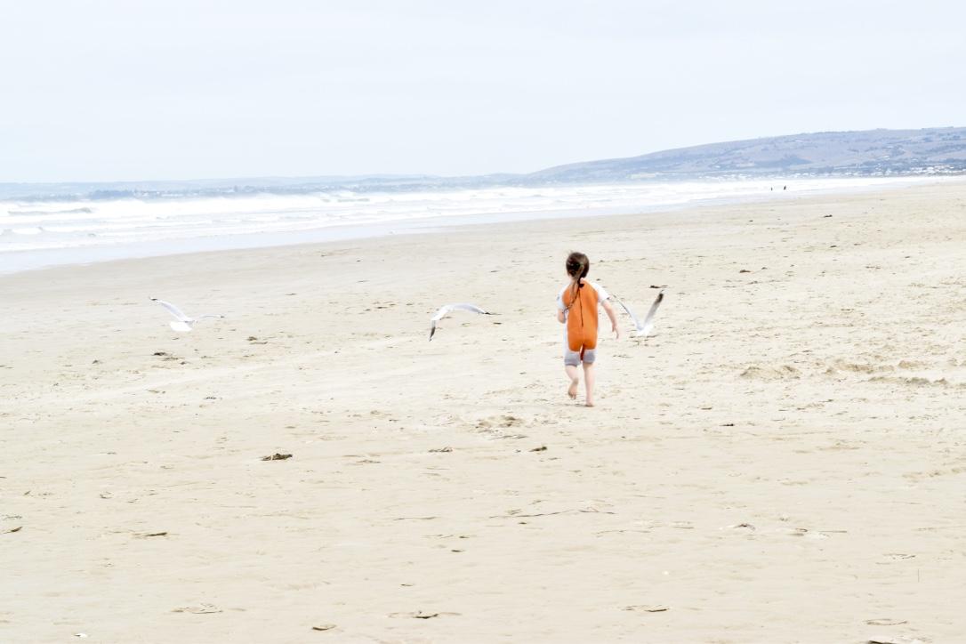 Beach-Fleurieu-Peninsula-Seagulls