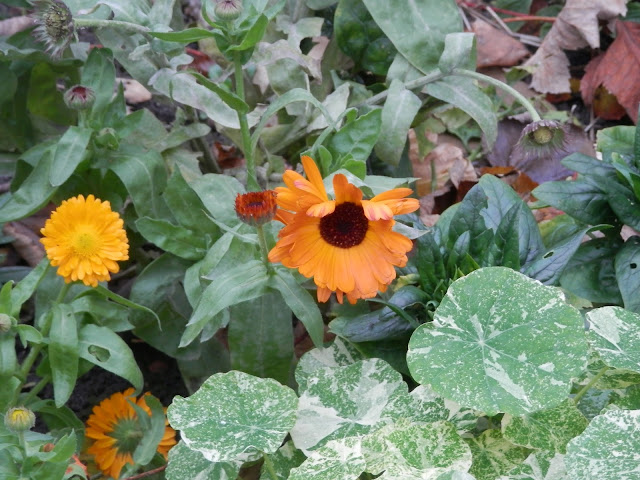 My Garden, November 2015. secondhandsusie.blogspot.co.uk #ukgardener #ukgardenblogger