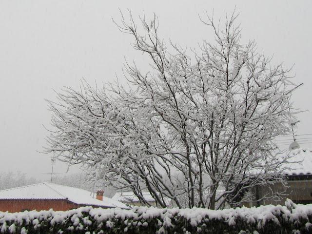 Nevicata invernale