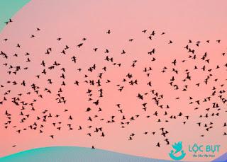 Chim yến non trưởng thành và bay khỏi nhà yến.