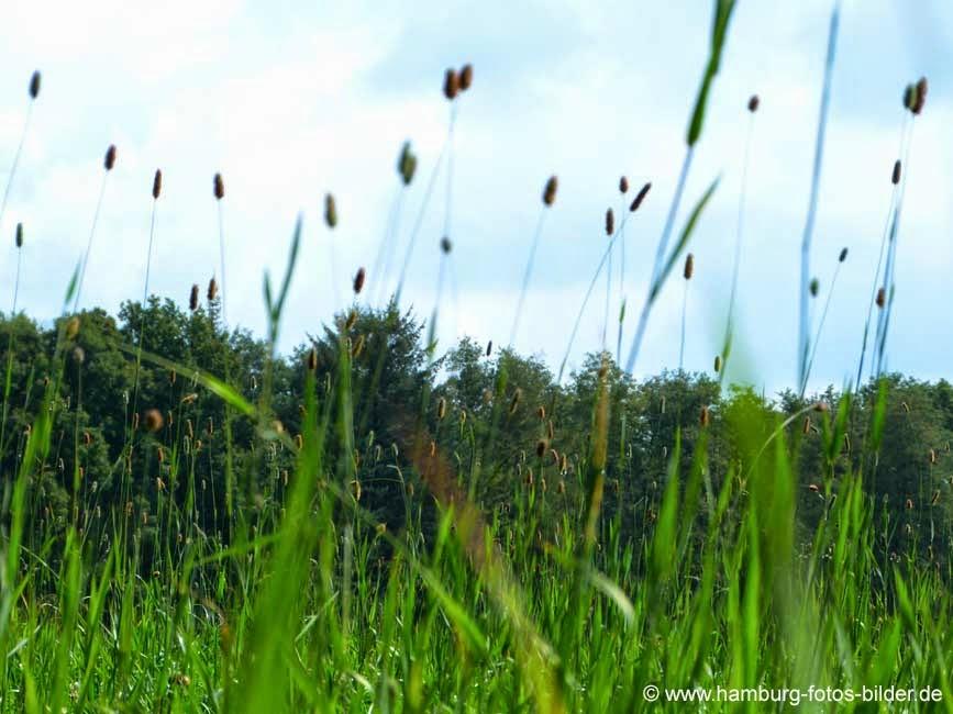 Insektenblick durch grünes Gras