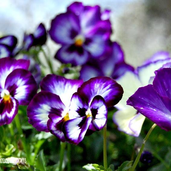 Wispy Willow Flower Farm