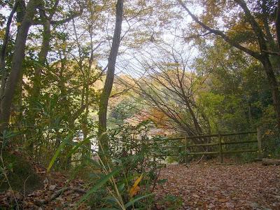 大阪府・府民の森〔緑の文化園〕むろいけ園地ハイキング