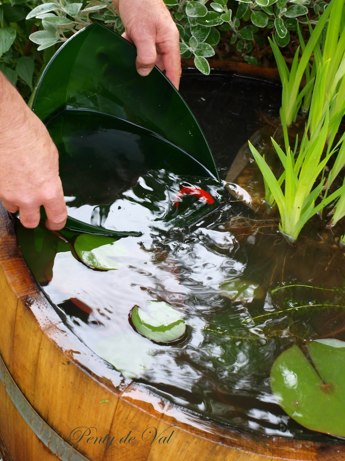 Penty De Val Un Mini Bassin Tonneau Dans Le Jardin