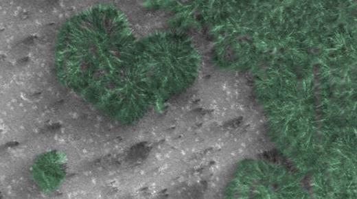 Vegetación en el polo sur de Marte