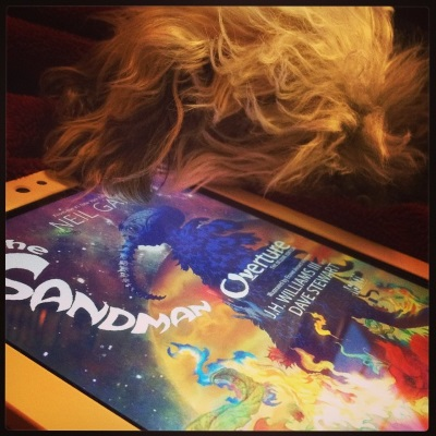 Murchie lies curled up against a white Kobo, his head titled away from the viewer so his ear shows but his face doesn't. The Kobo's screen contains the cover of The Sandman: Overture, featuring a dark-clad figure standing in a burning field beneath a dark sky mostly taken up by a brilliant orange planet.