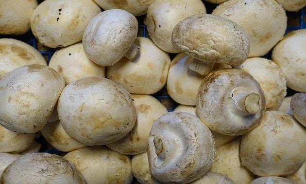 Cogumelos (agaricus sylvaticus)