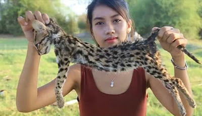 Kucing langka yang jadi santapan wanita cantik