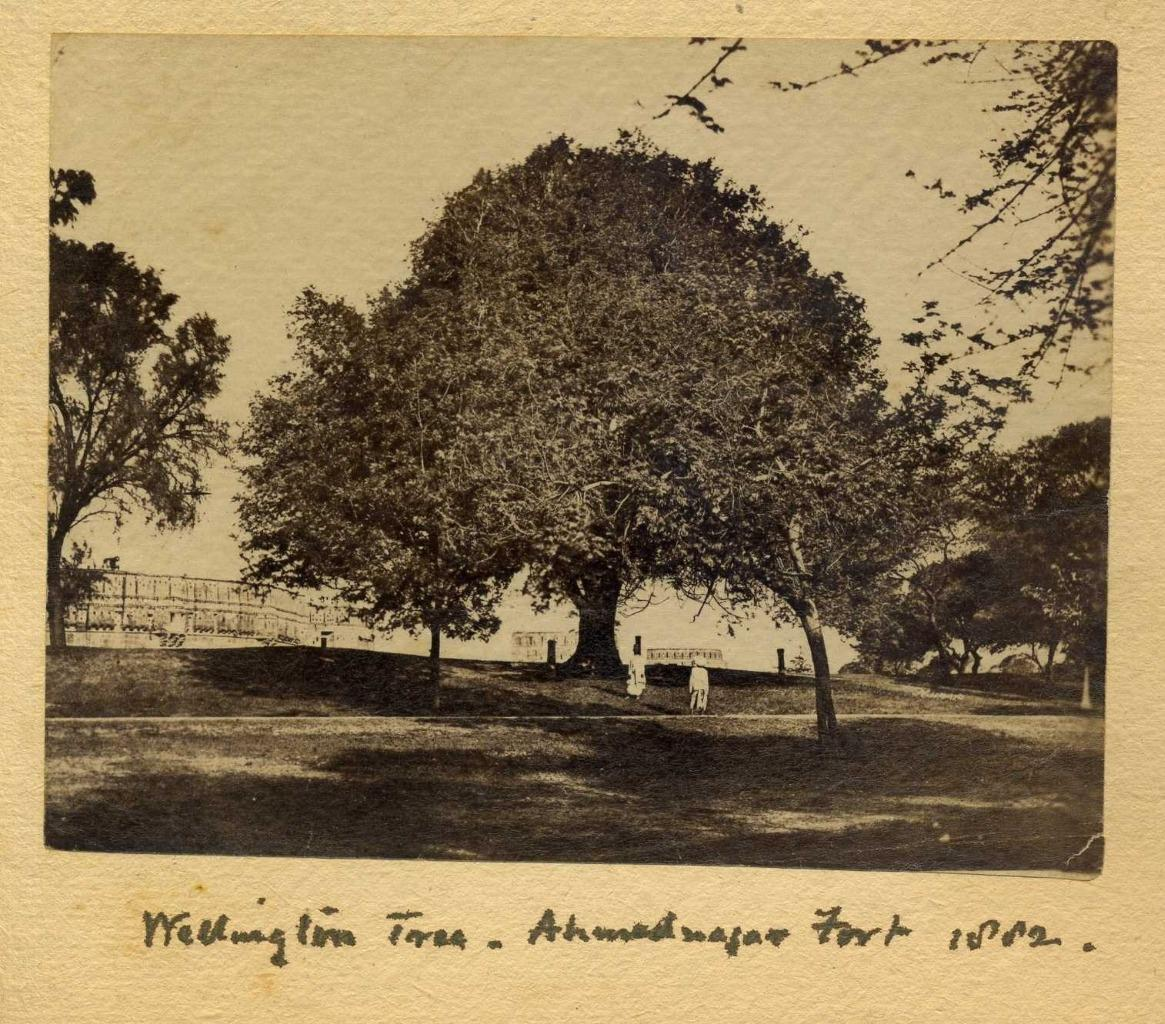 Wellington Tree at Ahmednagar Fort, Maharashtra