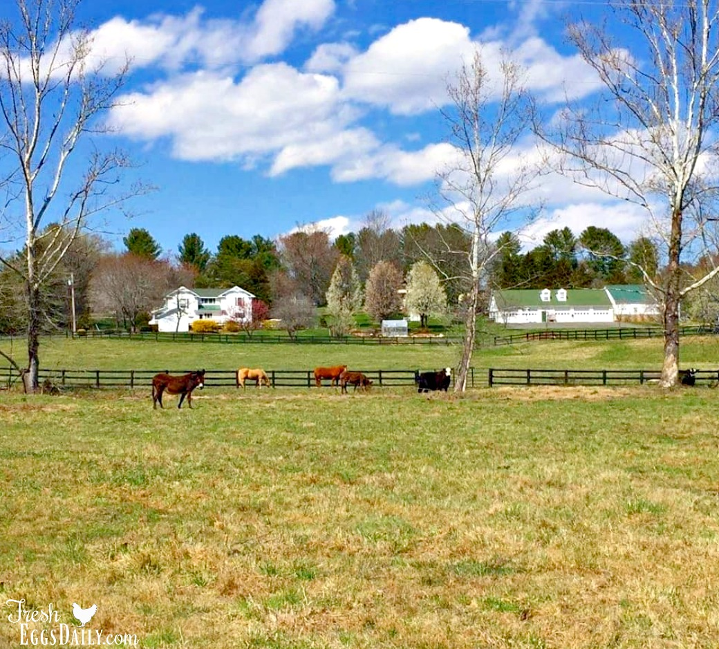 I think many of us myself included dreamed of owning a farm or homestead for awhile before it actually became a reality there are lots of considerations