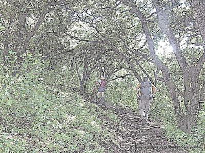 Rumbo a la loma de Cerro Viejo, subiendo por Potrerillos