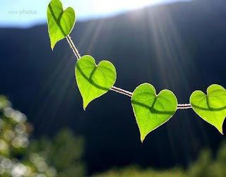 A szeretet ereje