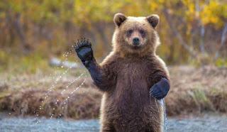 भालू पर निबंध Essay on Bear in hindi