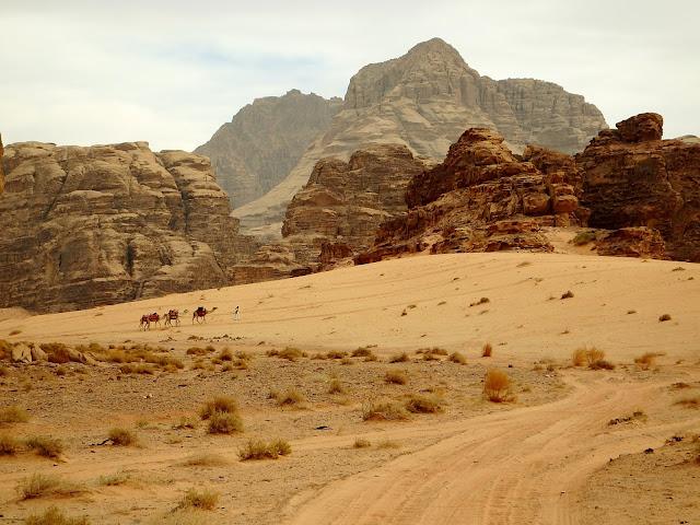 jordania camellos