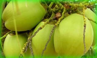 কোক ফানটা না খেয়ে ডাবের পানি খান? Benefits of Coconut Water