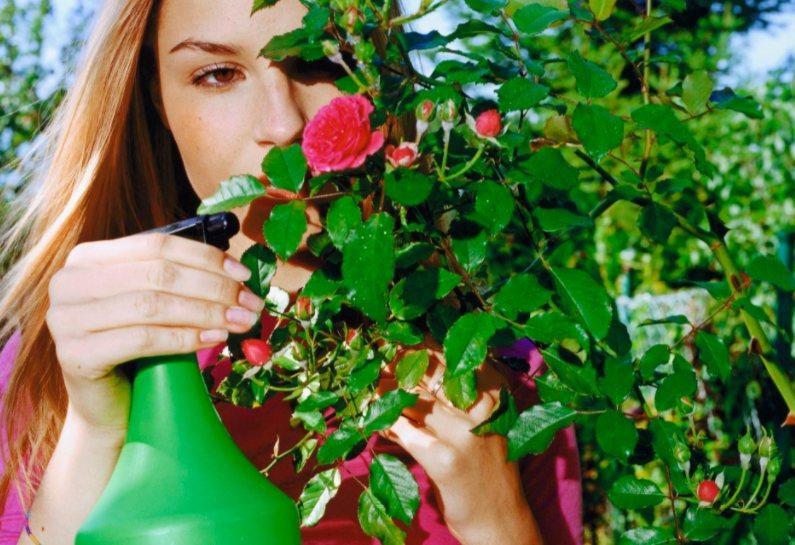 Kaip naikinti kambarinių augalų kenkėjus