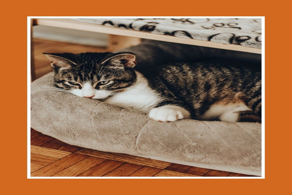 уютные фото с котиками, кот отдыхает