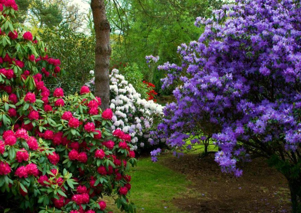 Paisajes del mundo paisajes bonitos de primavera for Jardines en primavera fotos