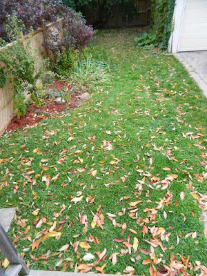 Toronto Fall Cleanup Yonge and Lawrence Backyard before by Paul Jung Gardening Services--a Toronto Organic Gardener