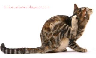 6 Cara Mudah Mengobati Kucing yang Terkena Kutu