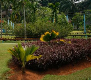 Selain Berburu Kuliner, Yuk ke Bogor untuk Mengunjungi Tempat Wisata Ini