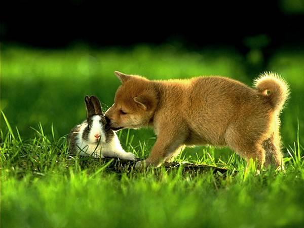 arnab-dan-anak-anjing