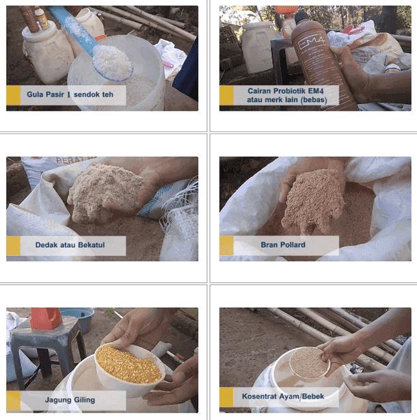 Cara Membuat Pakan Semi Fermented (Organik) untuk Ayam